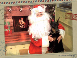 Picture of Giant Doberman on Santa Clause lap photo